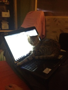 laptopcat