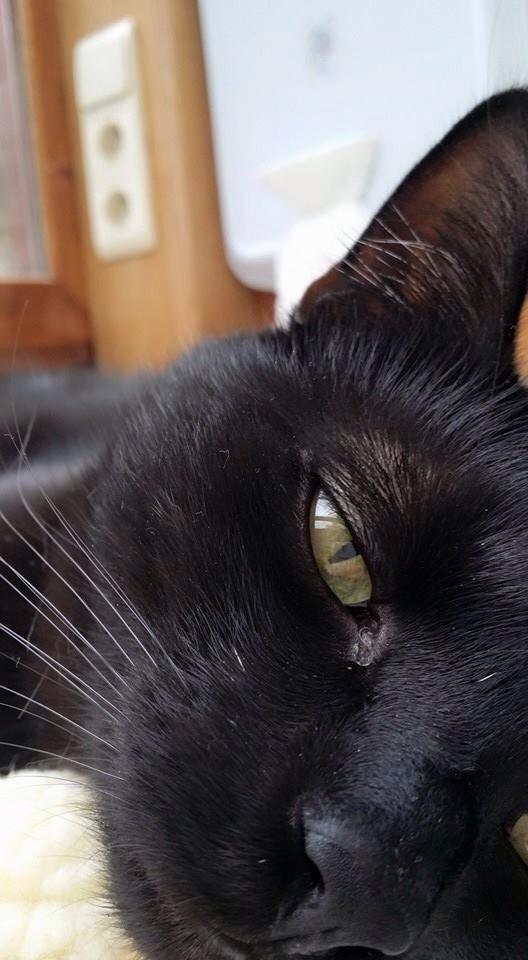 black cat chilling