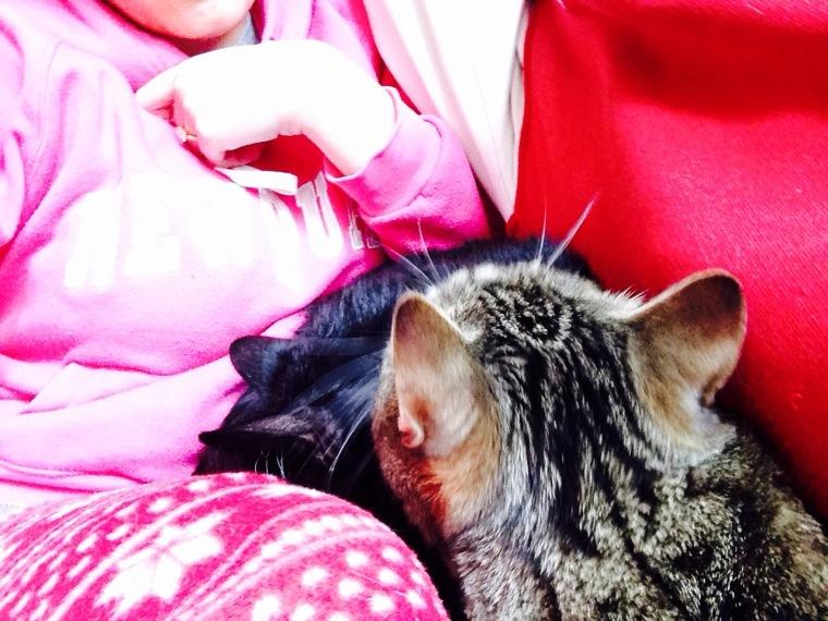 cats snuggle