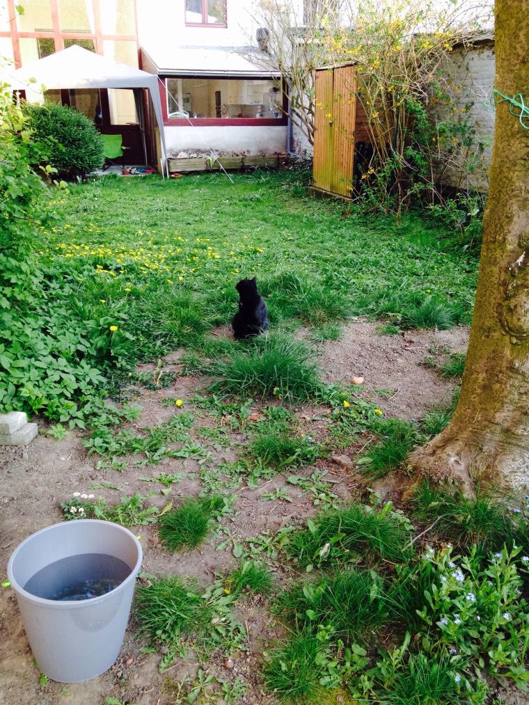 guest cat