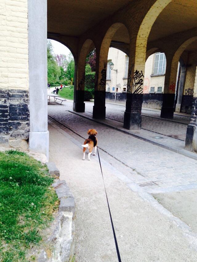 Cookie walking