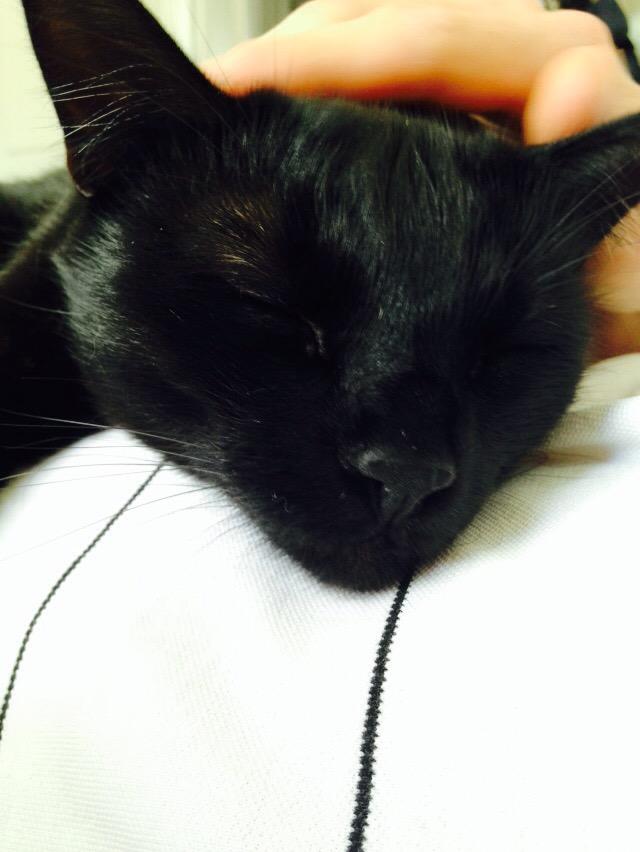blacket the cat